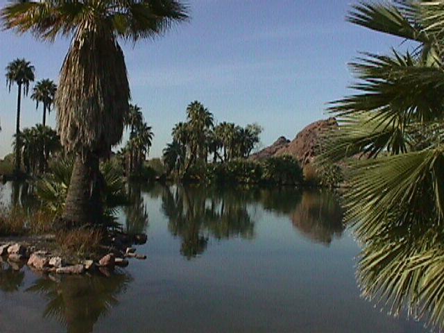 Phoenix Desert Oasis